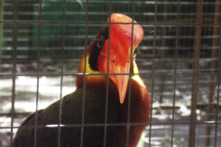 Oasi di Sant'Alessio Bird