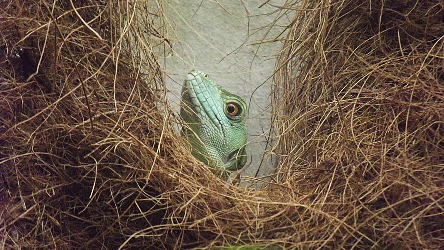Oasi di Sant'Alessio Gecko