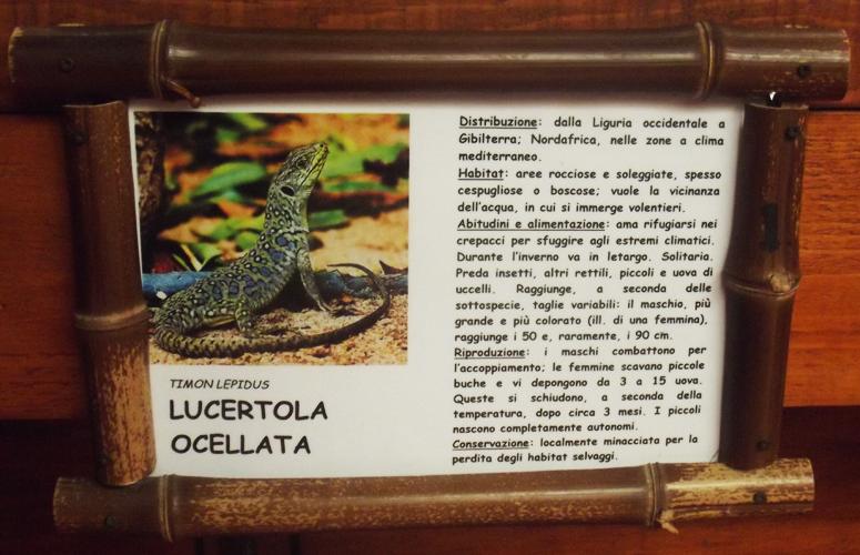 Oasi di Sant'Alessio Lizard Sign