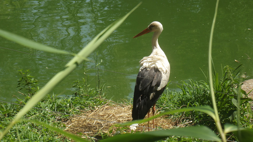 Oasi di Sant'Alessio Stork