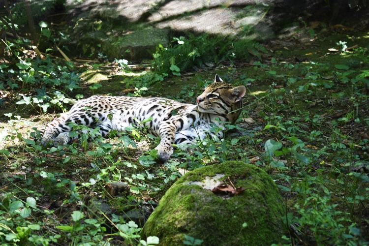 Zoo in Italy - La Torbiera