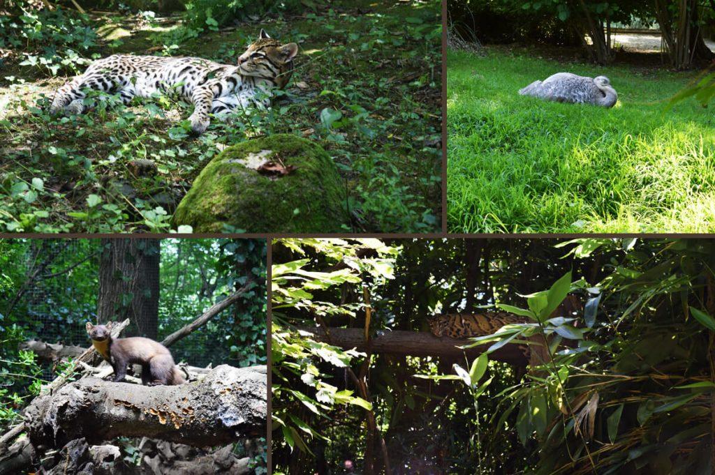 Zoo in Italy La Torbiera