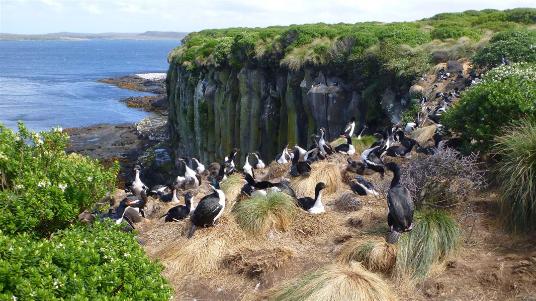 Auckland Islands You Must Visit